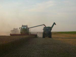Weizen dreschen mit Überladewagen
